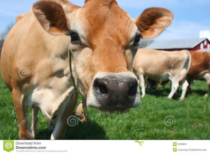 Totaallandbouw: ver voorbij het zweverige